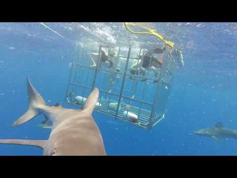 4 Плавание с акулами