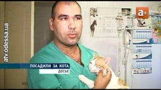 АТВ: Тюремный срок за издевательство над котом