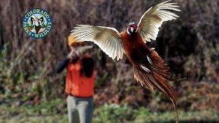 Baixar 2018 Colorado Pheasant & Quail Forecast