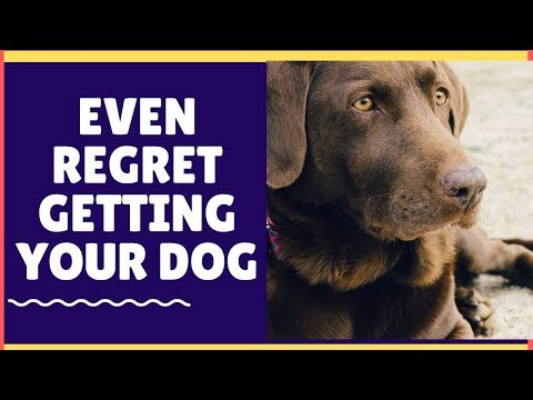 why-you-may-even-regret-getting-your-dog