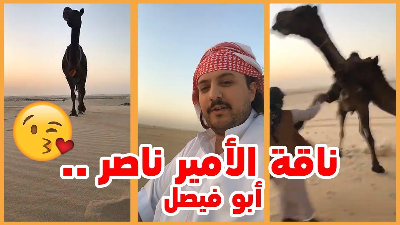 الامير ناصر بن نواف ابو فيصل ينادي ناقتة شوفو وش سوت بخوية Youtube