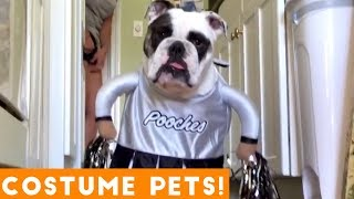 Try Not To Laugh At These Funny Pets In Costumes Video Compilation | Funny Pet Videos! thumbnail