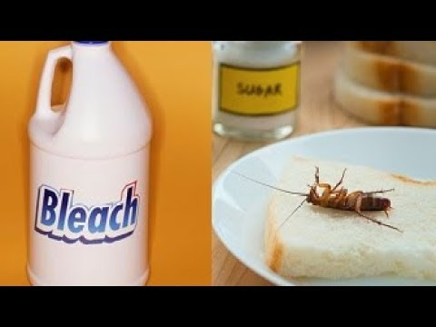 Get Rid Of Roaches By Using These 7 Proven Home Remedies Youtube