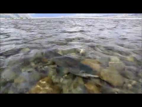 New Zealand, Islands of Trophy Trout - Part 1.wmv