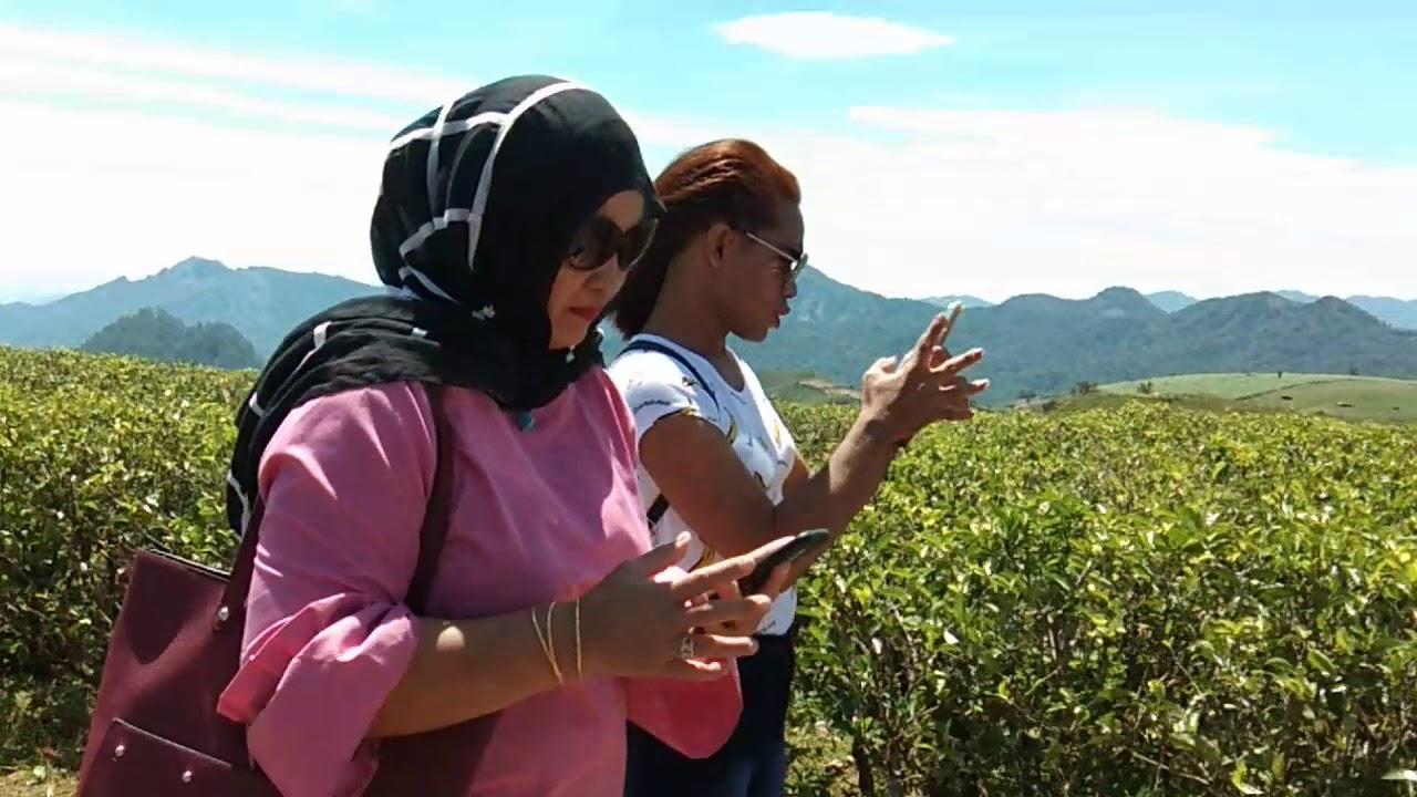 Keindahan Kebun Teh Tempat Wisata Malino Youtube