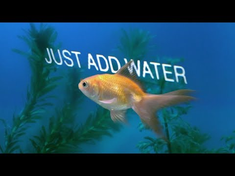 Just Add Water (Official Lyric Video)