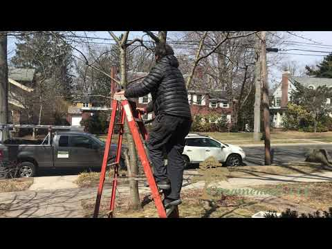 Grafting Tree Limbs in Connecticut