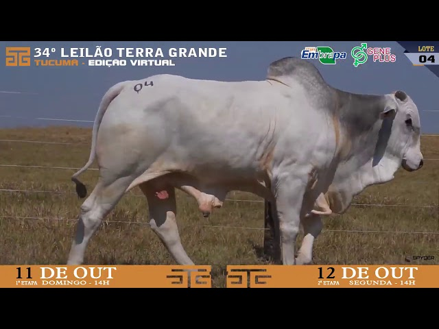 LOTE 004