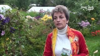 Правильный уход за лилиями осенью и подготовка к зиме