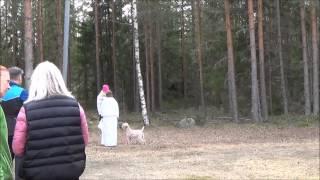 MH-luonnekuvaus, vehnäterrieri Elli, Porvoo 25.4.2015