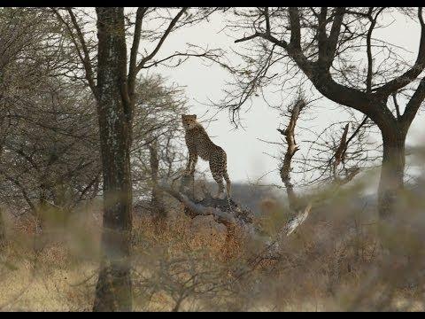 Safari Tanzania 2013
