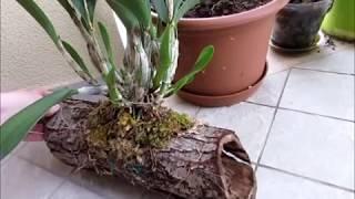 Обзор блоков для орхидей - какая древисина подойдет для ванды катлеи фаленопсиса?
