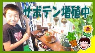 【植レポ】りょういちの植物レポート(家庭菜園) ・10月 サボテン増...