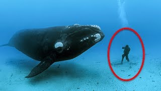 Humpback Whale Refused To Leave Diver Alone, Then She Sees Why And Begins To Panic