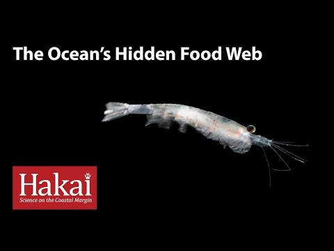 The Ocean's Hidden Food Web