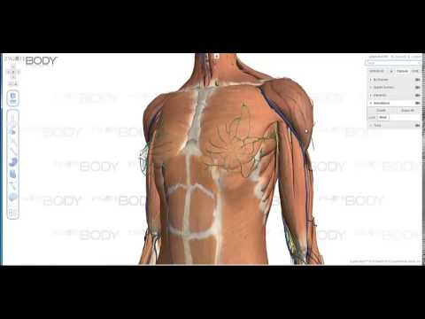 Zygote Body2 Overview