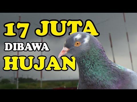 DIKALAHKAN HUJAN EVENT MOTOR Kolong Mataram Jaya Tegal