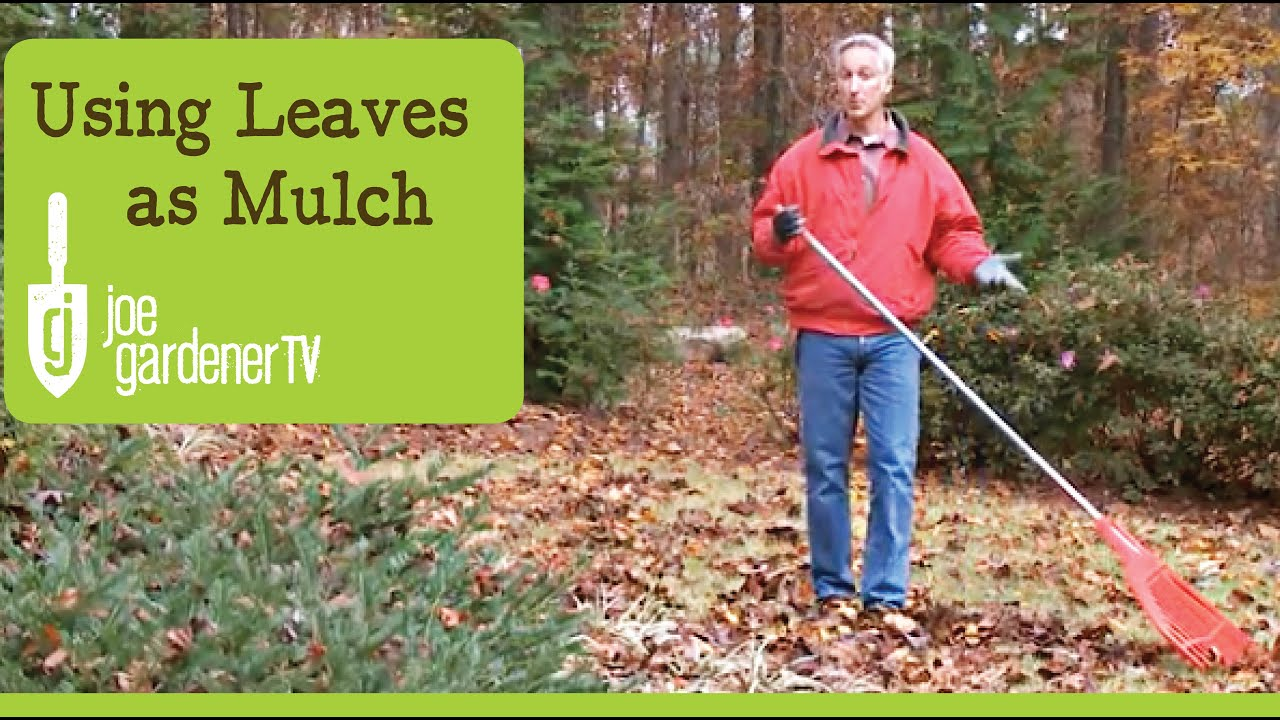 How To Use Leaves As Garden Mulch You