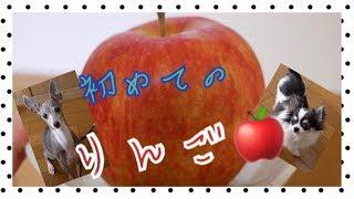 今日のおやつはコレ!! 初めてリンゴに挑戦です♪ ☆CAST☆ ルナ・・チワ...