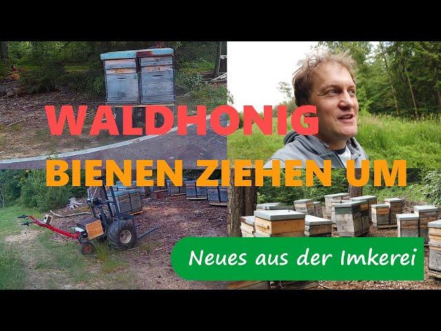 Waldhonig 2020/ Bienenwanderung/ Wandertechnik - Neues aus der Imkerei