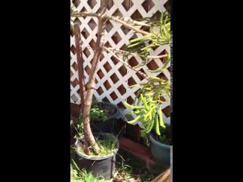 Gardening - My hobby