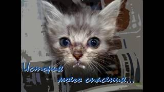 История спасения котят, выброшенных в яму умирать