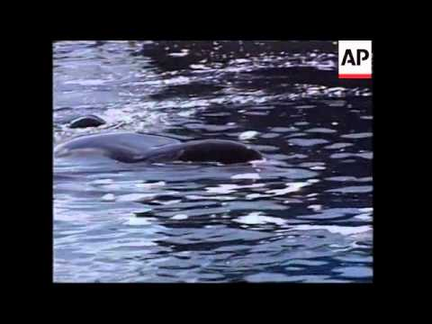'Free Willy' killer whale Keiko is dead