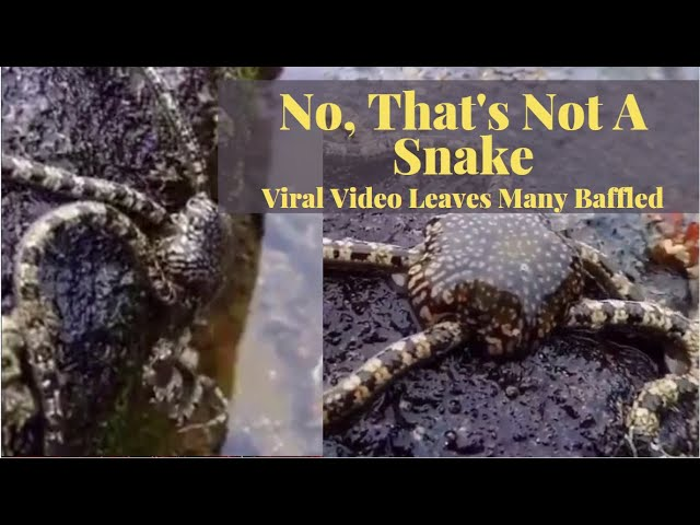 No, That's Not A Snake. Viral Video Leaves Many Baffled | 9 News HD