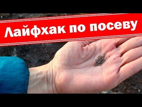 Лайфхаки посева мелких семян. Сеем петунию, алисум, годецию, эшшольцию.