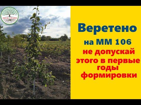 Обрезка яблони Веретеном на ММ 106. Не допускай этого в первые годы формировки.