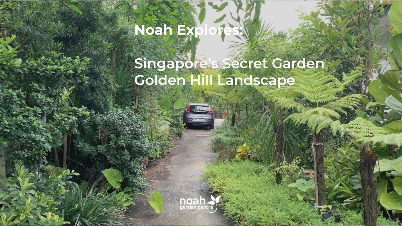 Golden Hill Landscape Noah Garden Centre