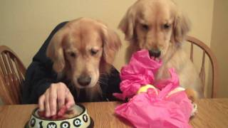Dog With Hands: Augie's 4th Birthday