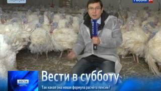 В Башкирии выращивают индюшек размером с барана(, 2013-11-23T13:55:33.000Z)