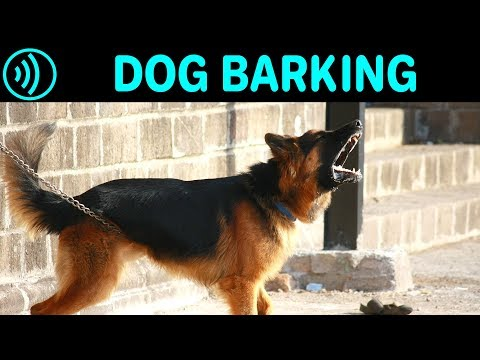 DOG BARKING SOUNDS  - Free Dog Barking Sound Effect For Download