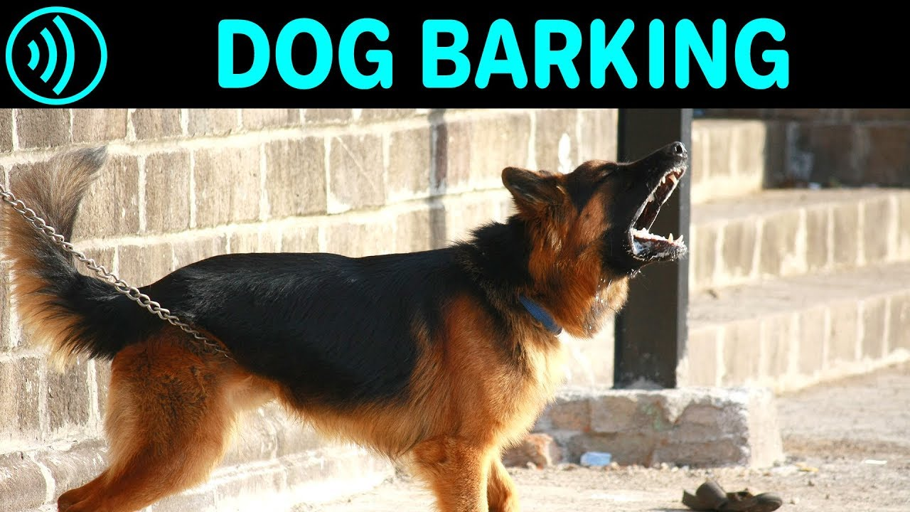 Dog Barking Sounds Free Dog Barking Sound Effect For Download Youtube