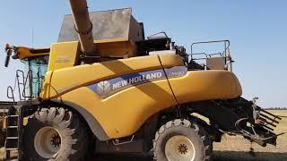 видео: Выращивание нута. No-till 28.08.2018. Уборка нута , очистка и фасовка