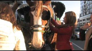City Lights - Concord Pacific Horse-Drawn Carriage Tour