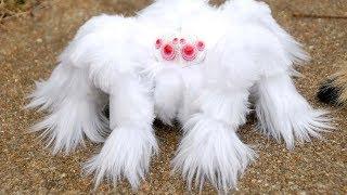 कैमरे में कैद दुनिया के 5 सबसे चौकानेवाली मकड़ीया 5 Most Amazing Spider You Won