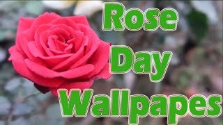Rose Day Wallpapers Download Free Hd rose day images copyright free