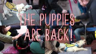 Puppy Therapy Returns to SFU