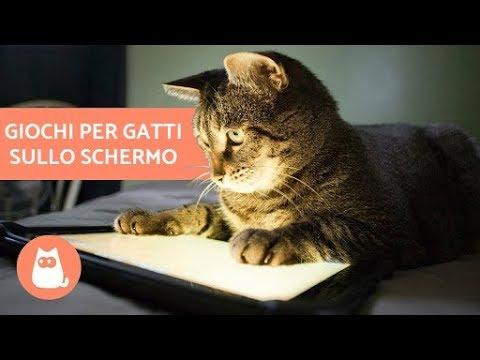 Giochi Per Gatti Sullo Schermocat Games Mouse Hunt Youtube