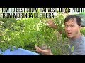 How to Best Grow, Harvest, Dry & Profit from Moringa in Your Backyard
