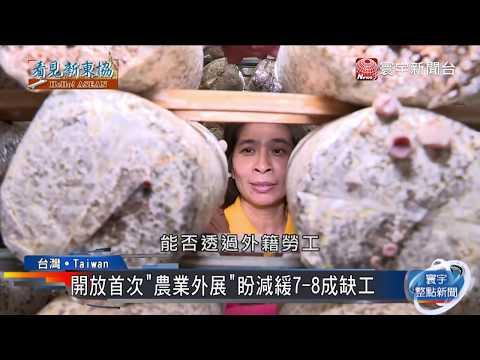 年輕人出走農村 台灣農業缺工引爆危機|寰宇整點新聞20190419