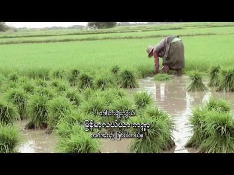 Burmese Agriculture January 22, 2017