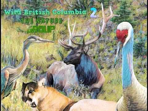 Wild British Columbia 2