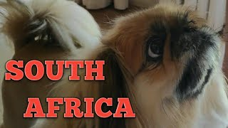 Trip to SOUTH AFRICA!! (Travel Vlog) // 2018 Christmas Vacation Part 1