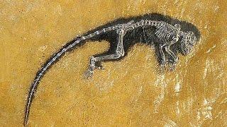 国立科学博物館「生命大躍進」展、先行公開=カンブリア、シルル紀の化石複製披露