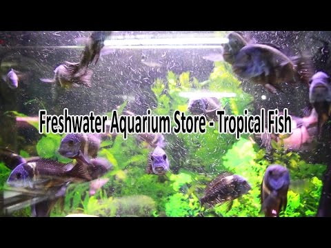 Freshwater Aquarium Store - Tropical Fish