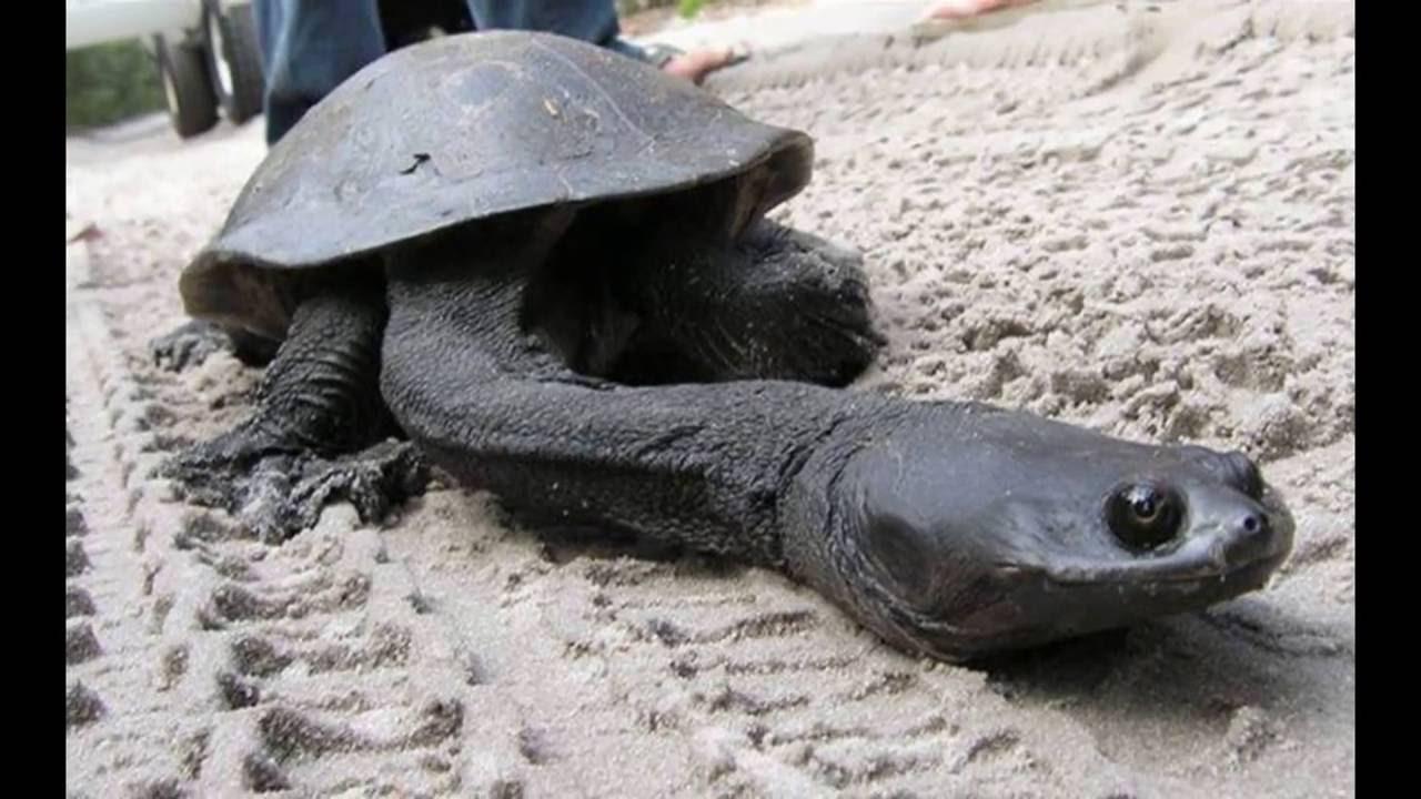 20 animales en peligro de extincion yahoo dating 6
