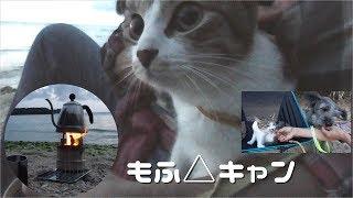今回の犬猫キャンプは沖縄のビーチでネイチャーストーブ(松ぼっくりの...